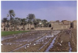 Irrigation in the Faiyum-Compressed